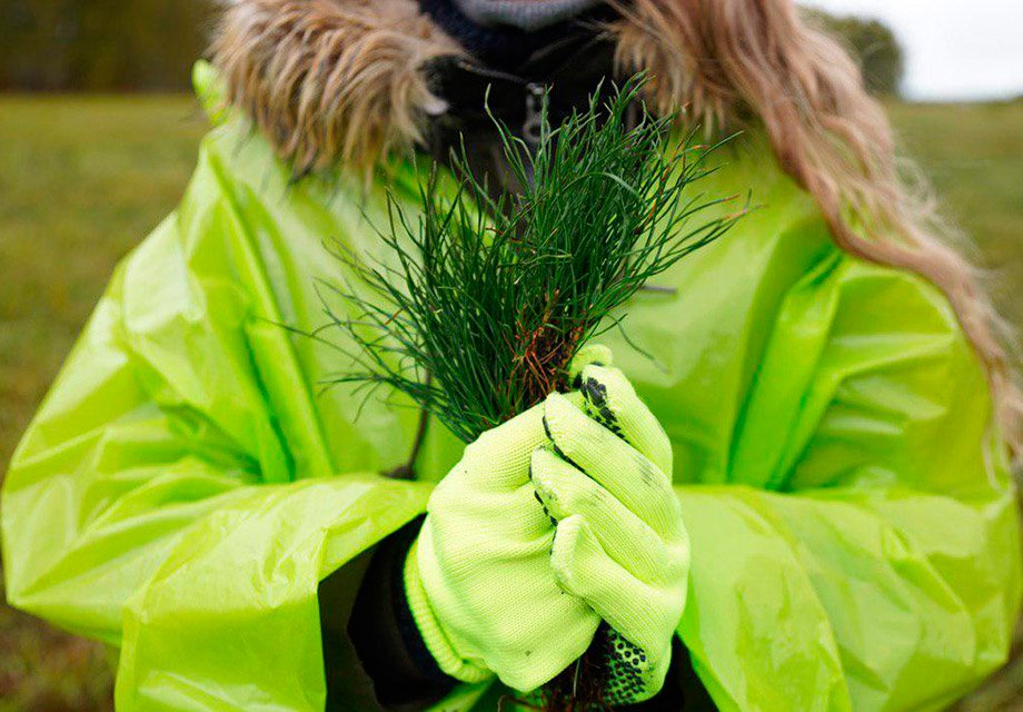 """We Are Siberia"": S7 Airlines planted the first 20,000 trees"